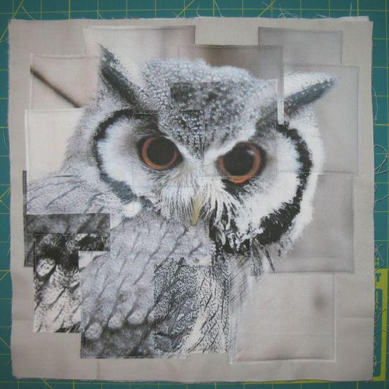 Congruence Owl 1