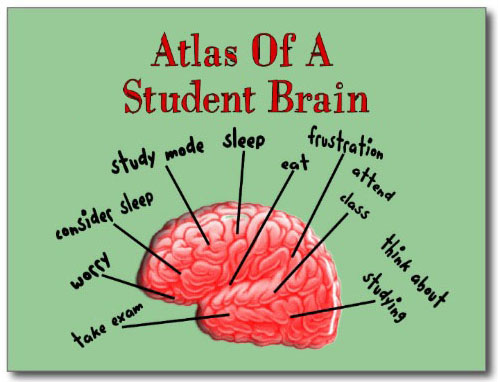 Student Brain Diagram
