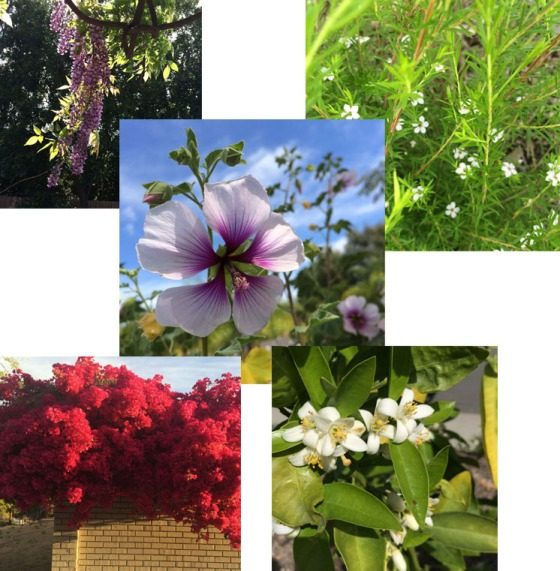 Flower Spring 2015