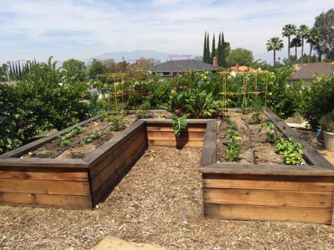 planted garden_April16