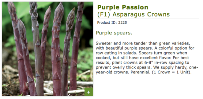 PurplePassion3