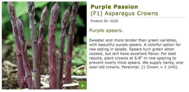 PurplePassion3