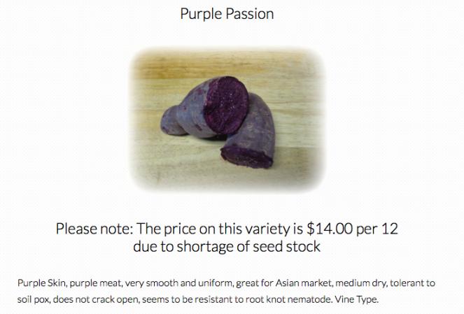 PurplePassion6