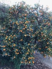 tempquilt kumquats_1