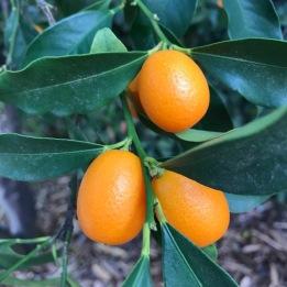 tempquilt kumquats_3