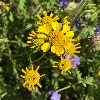 Riverside Flowers_3