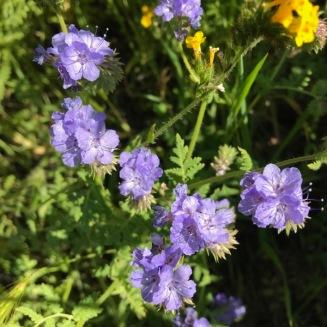 Riverside Flowers_4