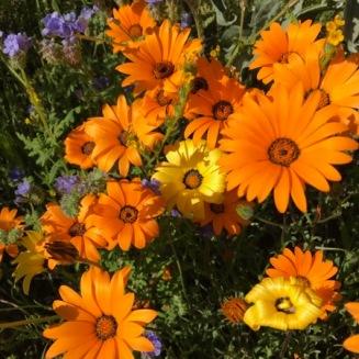 Riverside Flowers_5