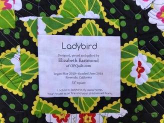 Ladybird_4